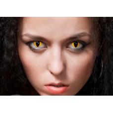 MAGIC LENS Cat Eyes